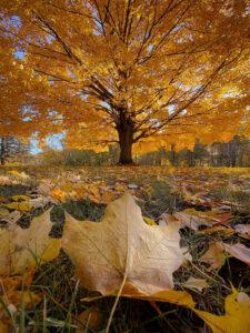 goede-zelfzorg-in-de-herfst-YogaLeeuwarden_YogaMetJoska_Leven-in-harmonie-met-de-seizoenen-herfst_Herfstbladeren