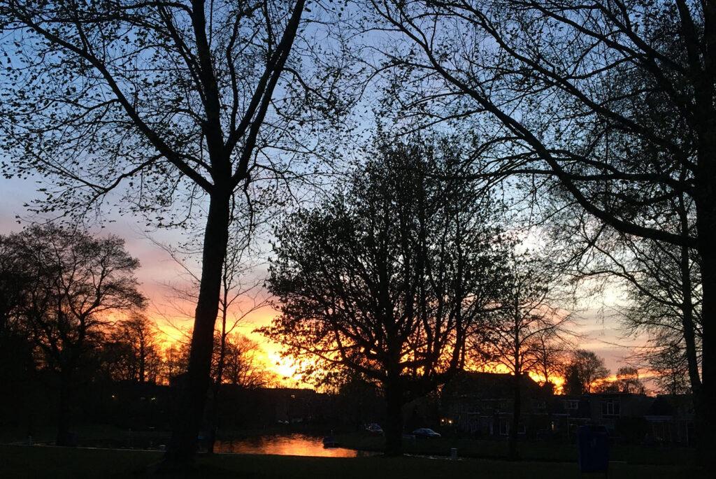 YogaLeeuwarden_YogametJoska_Prinsentuin_Natuur_Sunset_seizoenen-lente_houtelement